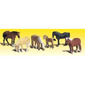 Horses (6pk)